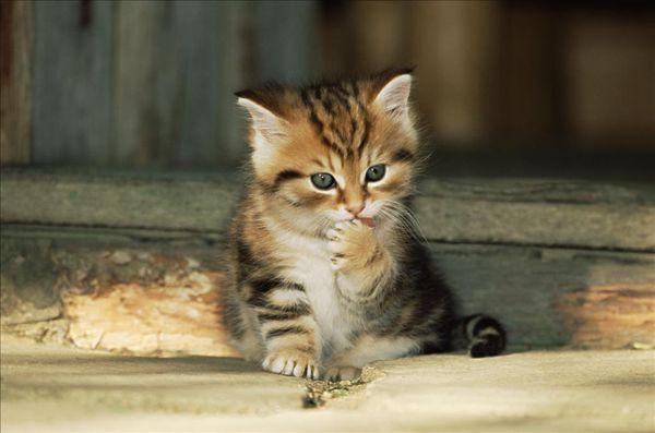 金色葡萄:写给猫的ipad游戏